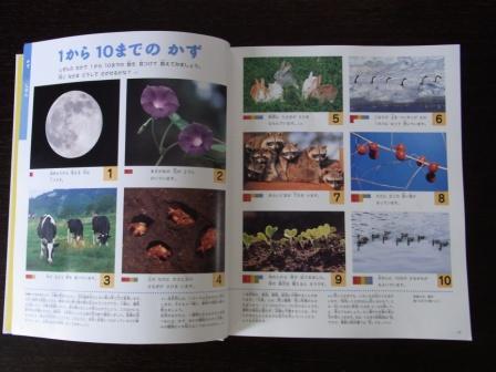 図鑑 (2)