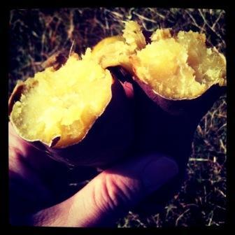 焼き芋 (5)
