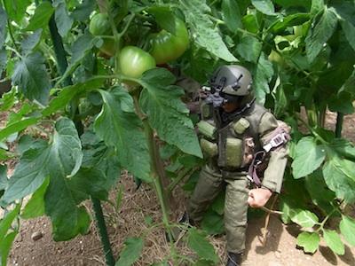 トマト20110706