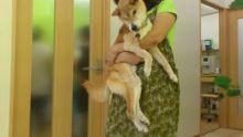 ケンの家 神奈川本部  一匹でも多くの命を救いたい!-rps20120901_222946.jpg