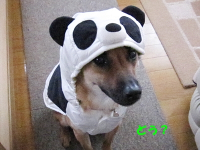 ケン太パンダ
