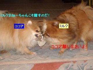 20100319_2_2.jpg