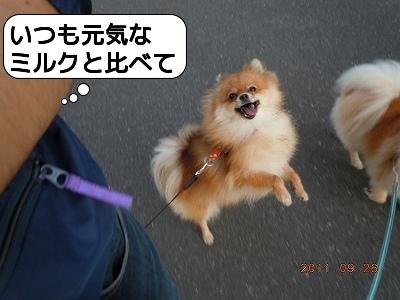 20110926_001.jpg