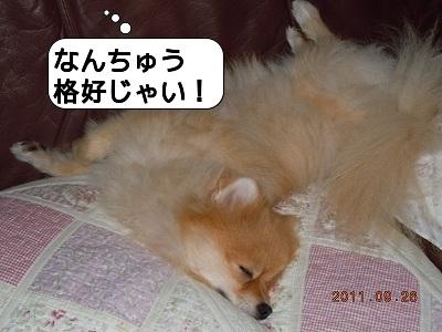 20110926_002.jpg