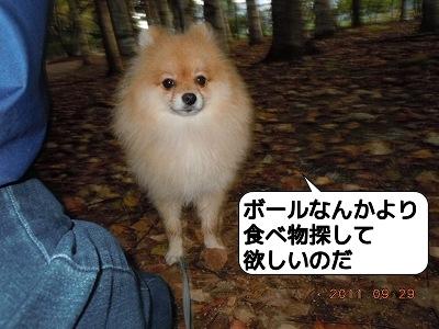 20110929_003.jpg