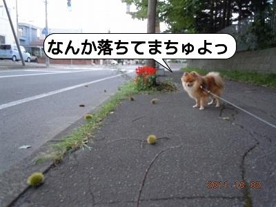 20111002_001.jpg