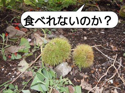 20111002_003.jpg