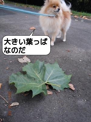 20111002_006.jpg