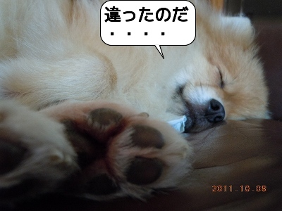 20111008_005.jpg