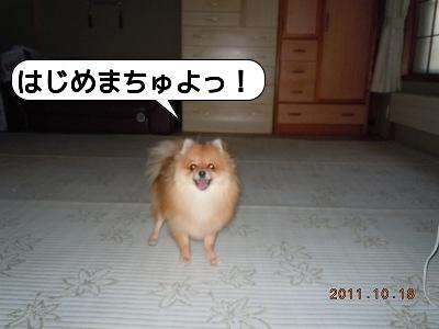 20111018_001.jpg