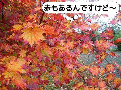 20111023_003.jpg