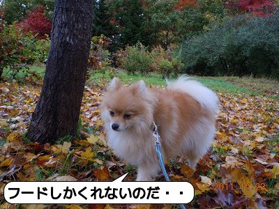 20111023_010.jpg