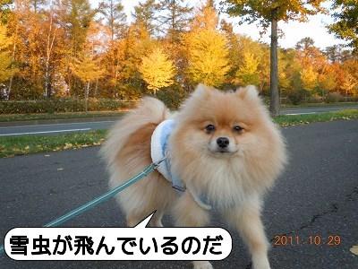 20111030_005.jpg