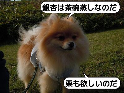20111030_009.jpg