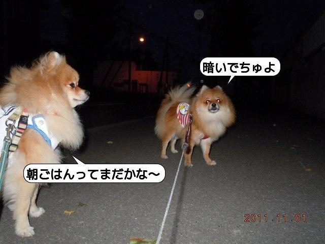 20111101_002.jpg