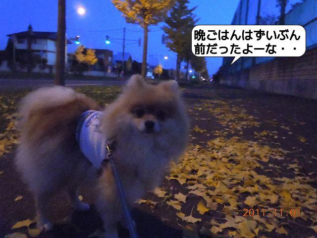 20111101_003.jpg