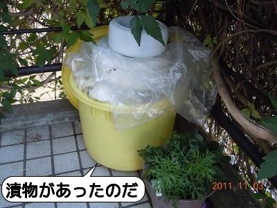 20111106_008.jpg