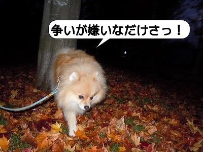 20111108_001.jpg