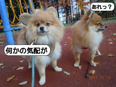 20111113_003.jpg