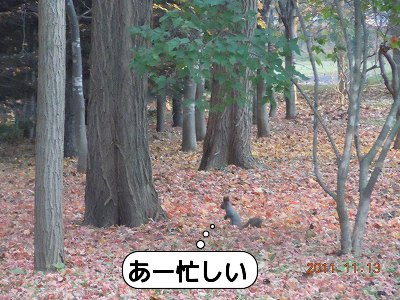 20111113_004.jpg