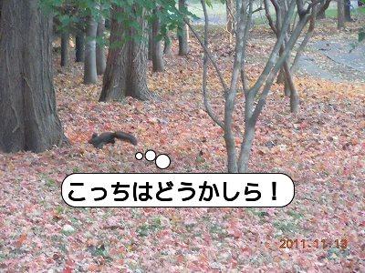 20111113_005.jpg