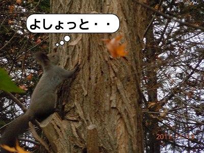 20111113_006.jpg
