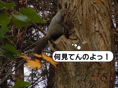 20111113_007.jpg
