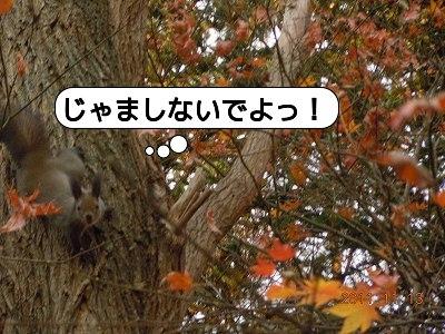 20111113_008.jpg