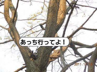 20111113_009.jpg