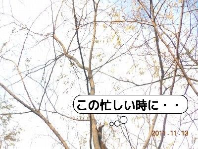 20111113_010.jpg