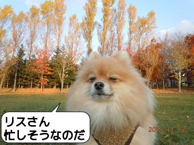 20111113_011.jpg