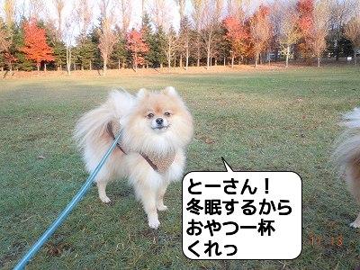20111113_012.jpg