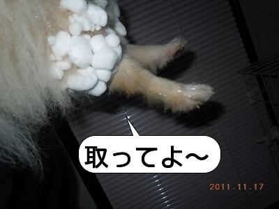 20111117_005.jpg