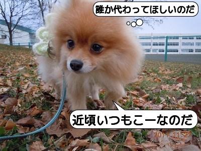 20111127_006.jpg