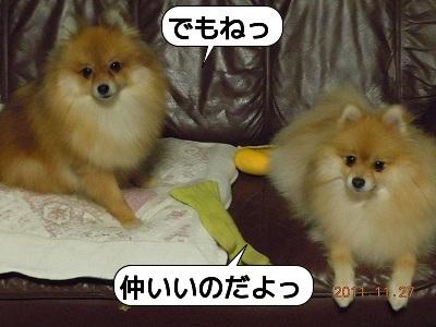 20111127_007.jpg