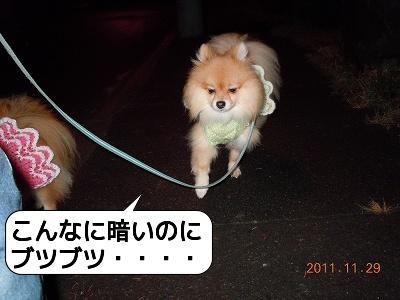 20111129_001.jpg