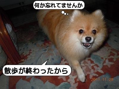 20111129_002.jpg