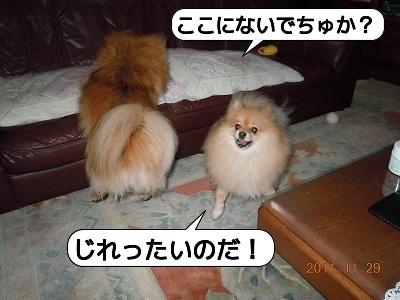 20111129_004.jpg
