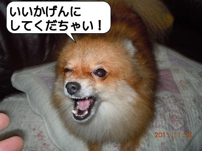 20111129_005.jpg