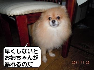 20111129_006.jpg