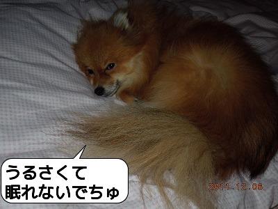 20111206_004.jpg