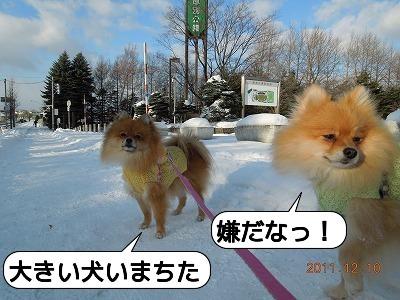 20111210_003.jpg