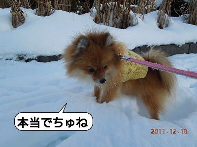 20111210_005.jpg