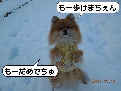 20111210_008.jpg