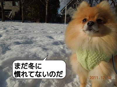 20111210_009.jpg