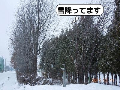 20111211_001.jpg