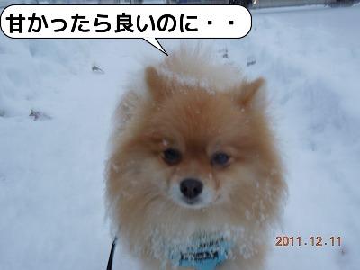 20111211_002.jpg