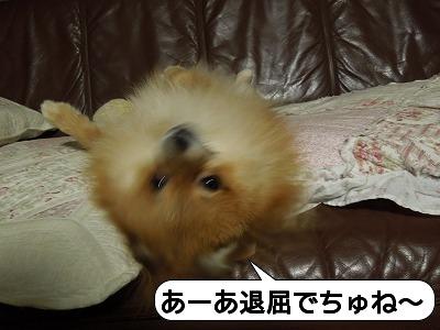 20111211_003.jpg