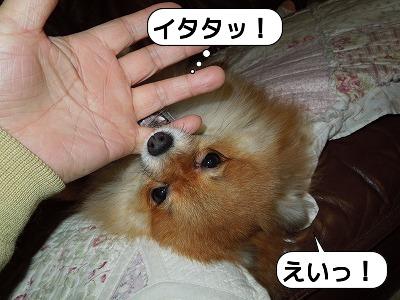 20111211_004.jpg