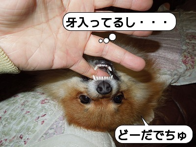 20111211_005.jpg